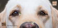 """Portada de l'audioconte """"Amb ulls de gos"""""""